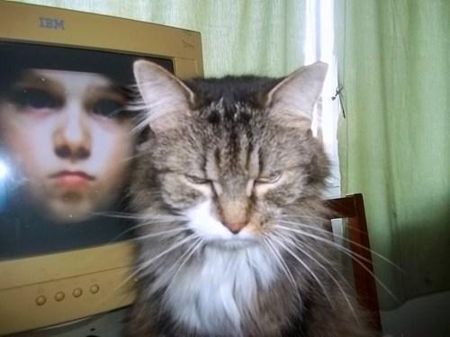 cat,TV