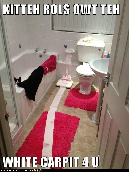 cat bathroom funny - 7035438592