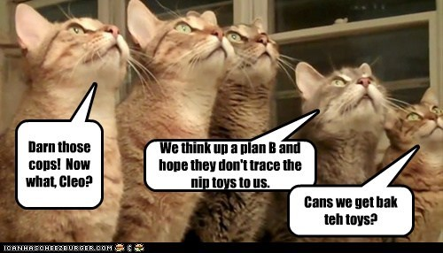 Darn those cops! Now what, Cleo? We think up a plan B and hope they don't trace the nip toys to us. Cans we get bak teh toys?