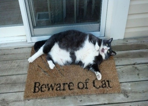 scary,fat,beware,welcome mat,watch out,Cats