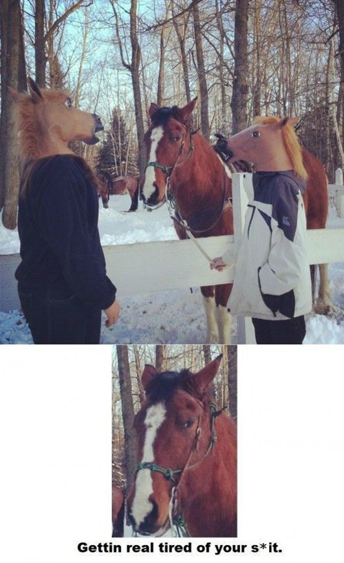 horse mask,making fun,horses,poorly dressed