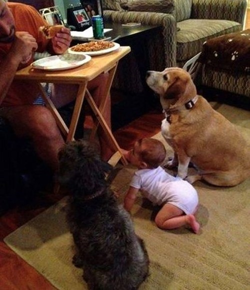 dogs baby dinner - 7035513088