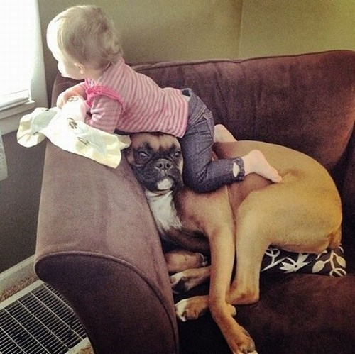 baby,couch,dogs