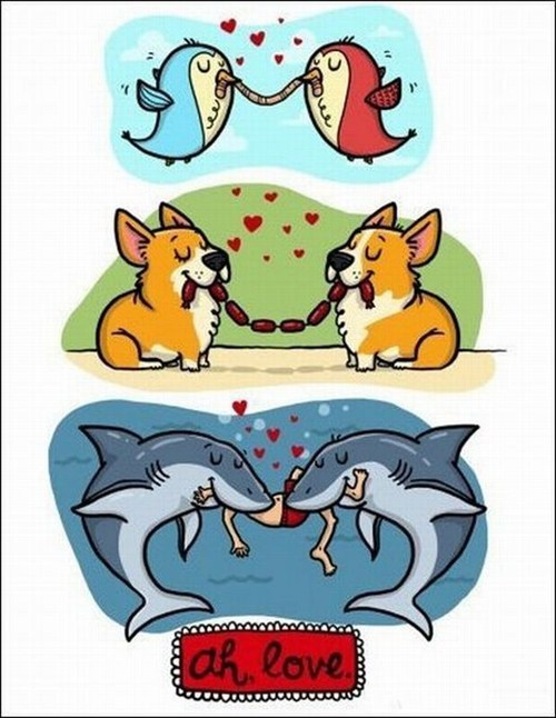 dogs birds sharks animals true love - 7035523584