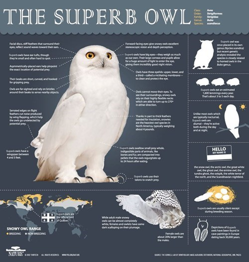 superb,similar sounding,Owl,big game,liaison