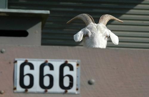 goat,wtf,666