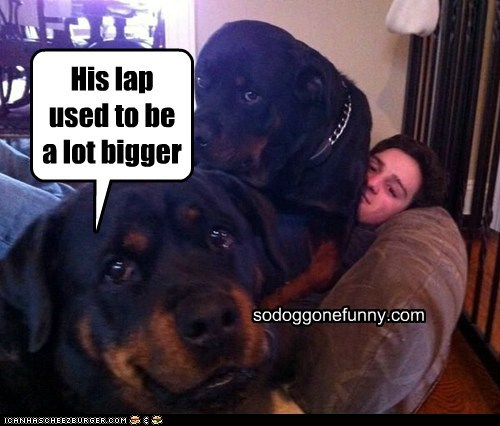 His lap used to be a lot bigger sodoggonefunny.com