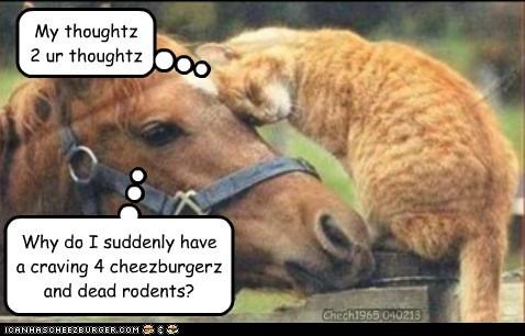 Cheezburger Image 7036275200