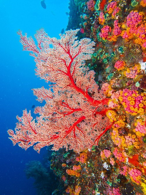 diving,coral,ocean,pretty colors