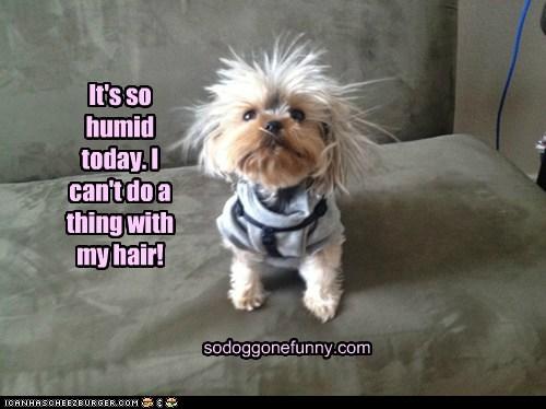 It's so humid today. I can't do a thing with my hair! sodoggonefunny.com