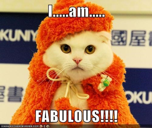 cat fashion fabulous funny - 7036355328