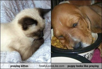 praying kitten Totally Looks Like puppy looks like praying