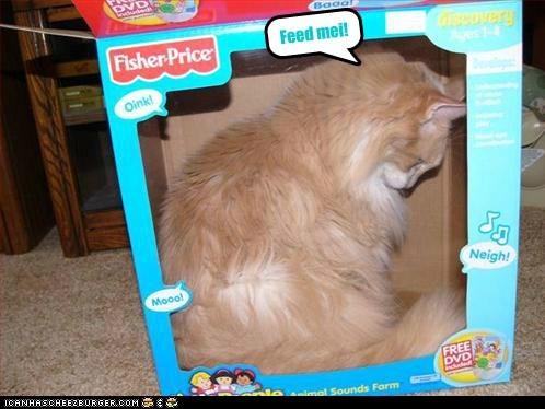 Cheezburger Image 7037925632