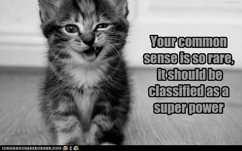 cat kitten kitty sarcasm funny - 7038182912