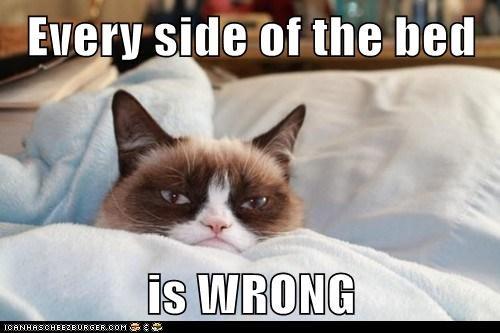 cat tardar sauce no Grumpy Cat funny - 7038494976