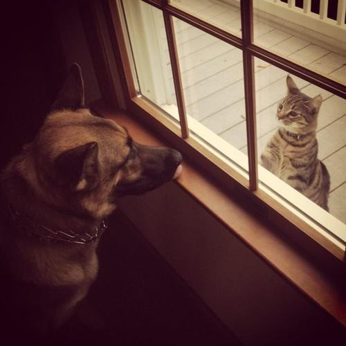 door,dogs,interspecies,friends,goggies r owr friends,Cats