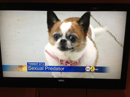 news cute sexual predator dogs - 7039226624