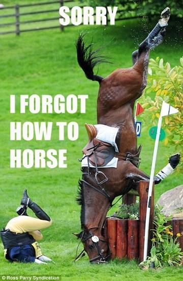 ride rider FAIL horseriding horse fall - 7039302400
