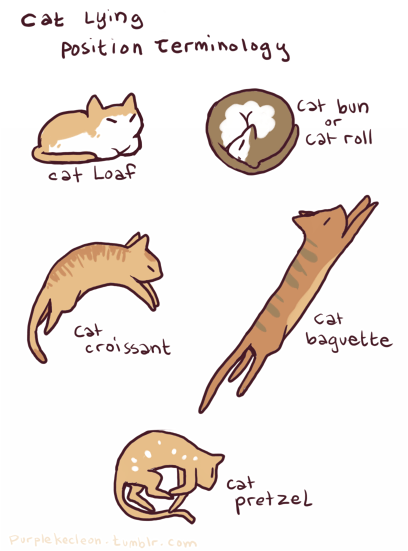 roll bakery baguette positions bread comic pastries Cats - 7039336704