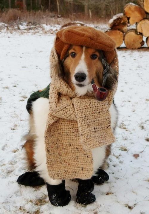 scarf countryside dogs country walk winter pipe - 7039351296