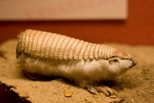 whatsit armadillo armor scales claws squee furry