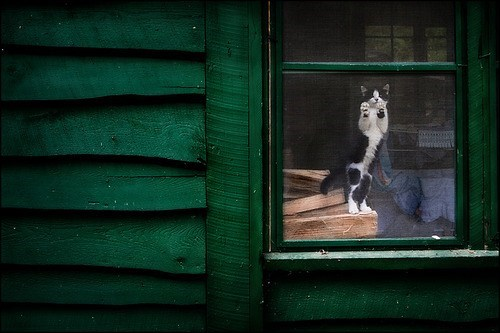 cyoot kitteh of teh day,green,house,stare,watch,Cats,window,screen