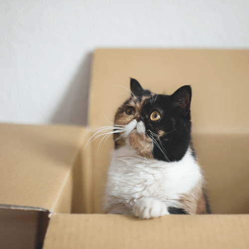 cyoot kitteh of teh day,box,squishface,stare,Cats