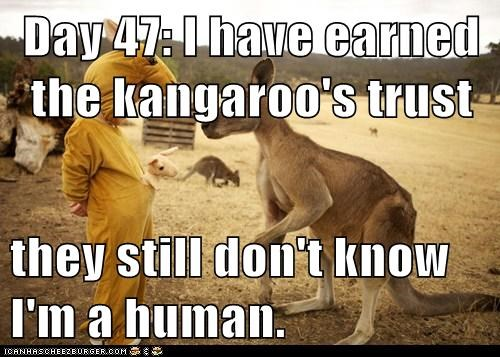 they still don't know human day trust kangaroos - 7039632640