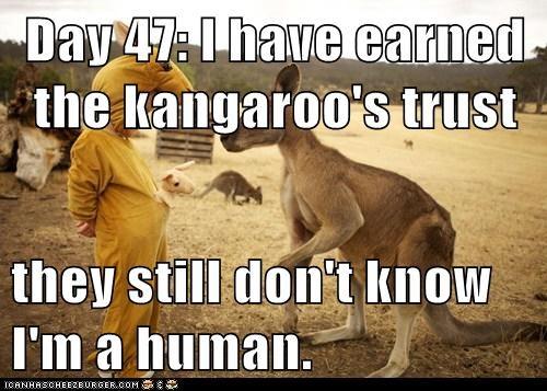 human day trust kangaroos - 7039632640