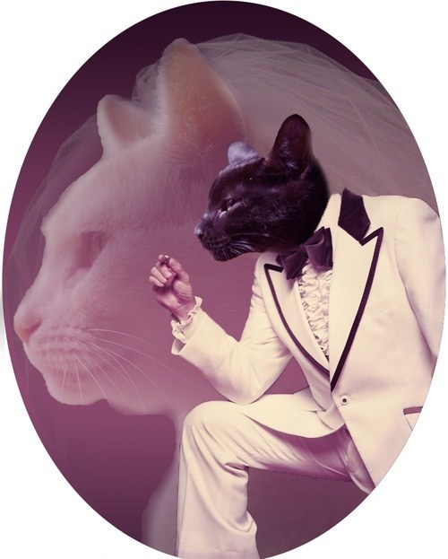 snazzy photoshop tux Party Cats - 7039746304