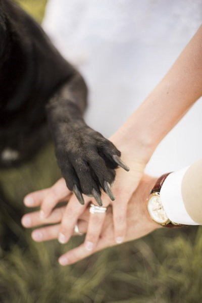 paw cute hands dogs couple