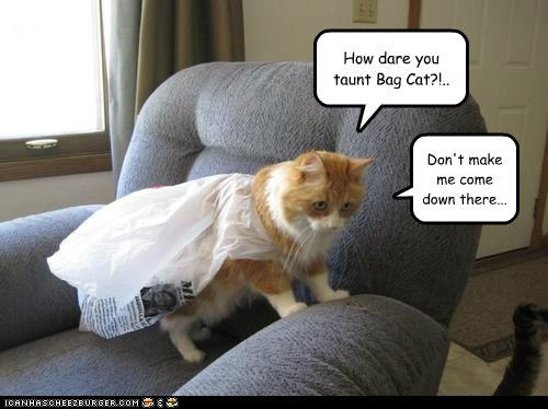 How dare you taunt Bag Cat?!.. Don't make me come down there...