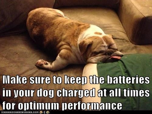 dogs lazy bulldogs batteries derp
