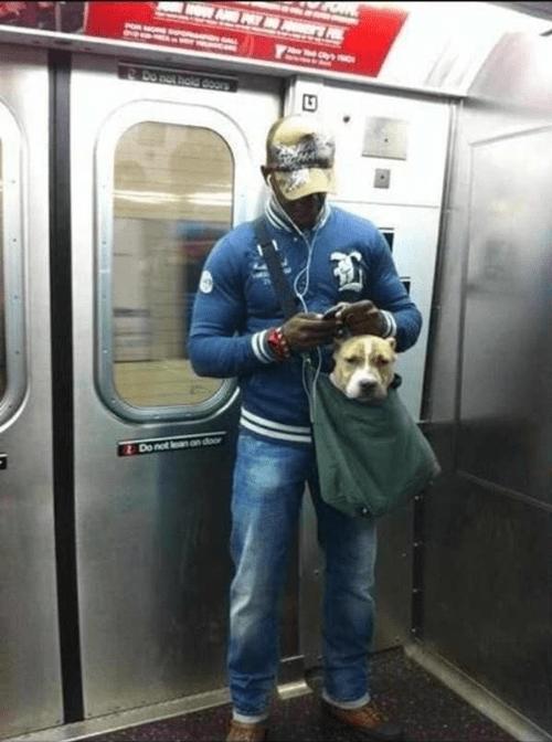 cute public transit dogs bus - 7039979264