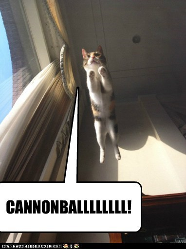 cat fly jump funny - 7040383488