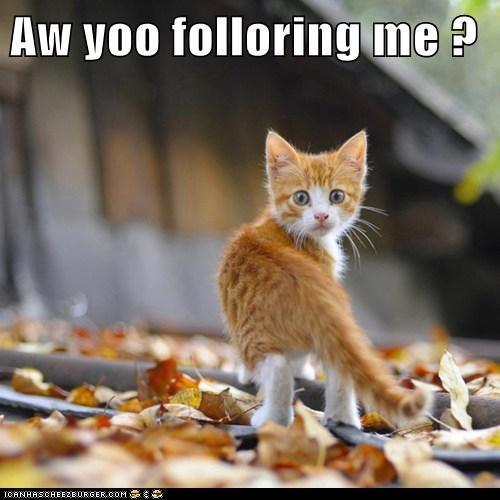 Aw yoo folloring me ?