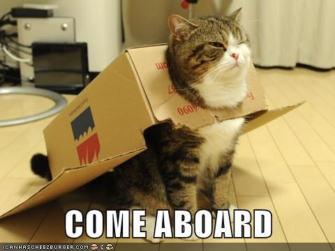 cat,box,maru,funny