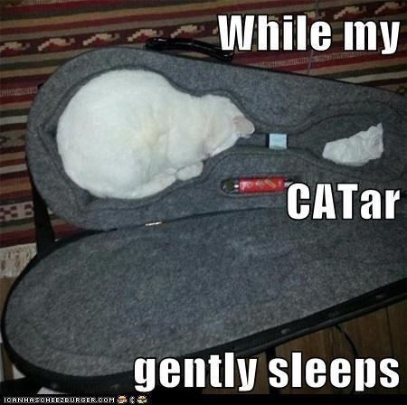 cat Music instrument funny - 7041460736