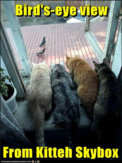 cat bird funny window - 7041476096