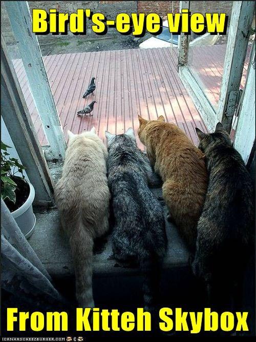 cat bird funny window - 7041476096