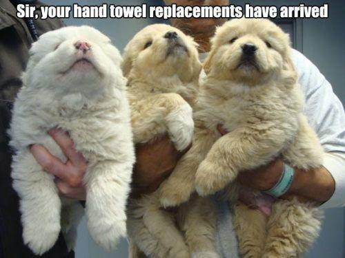 fur dogs newfie puppy fluff fuzz newfoundland hand towel - 7041650688