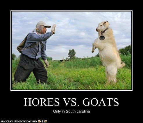 HORES VS. GOATS Only in South carolina