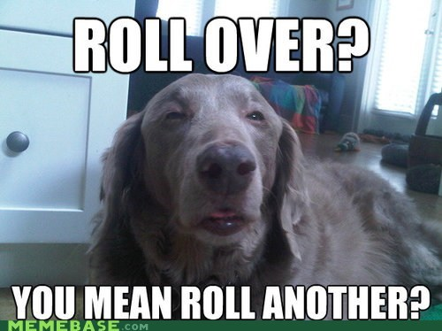 Rover, Have You Been Hanging Out With Stoner Dog Again?