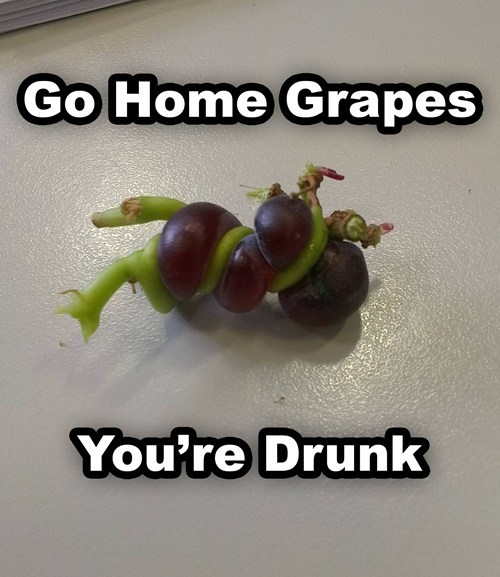 go home,alcohol,drunk,grapes,after 12,g rated