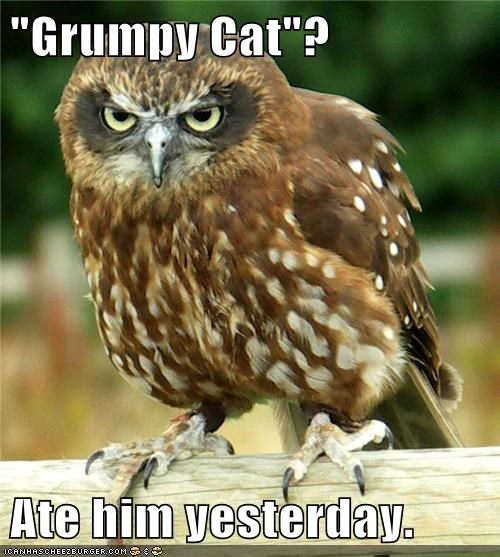 owls not impressed eating Grumpy Cat