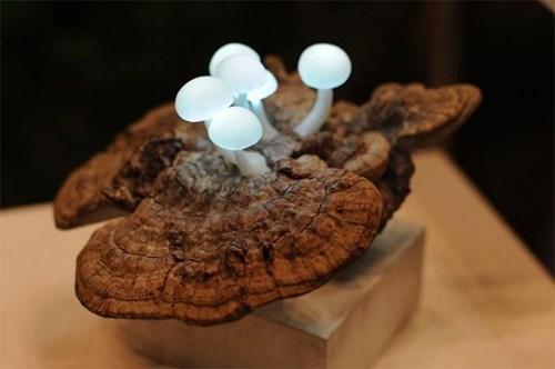 lamp,design,mushroom