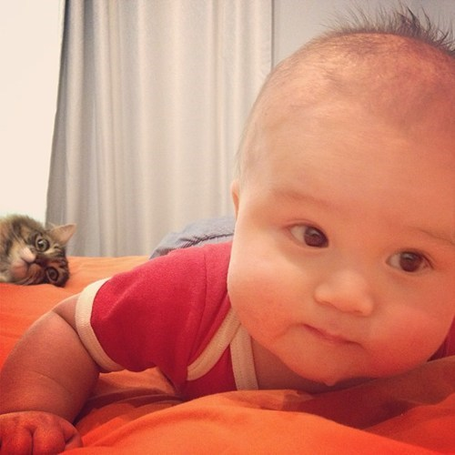 cat,baby,cute,lolspeak