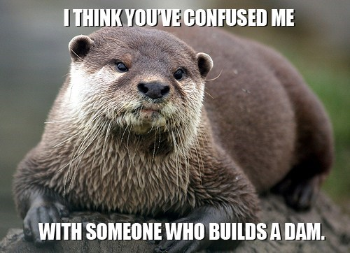confusion,dam,beaver,IDGAF,otter,not interested
