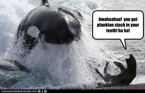 bwahaahaa! you got plankton stuck in your teeth! ha ha!