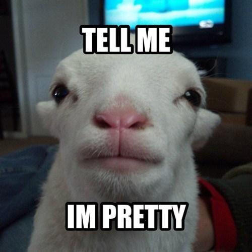 face sheep pretty - 7042690048